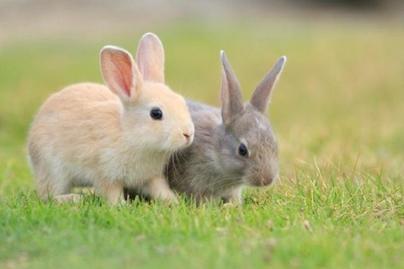 ウサギたちの楽園 大久野島