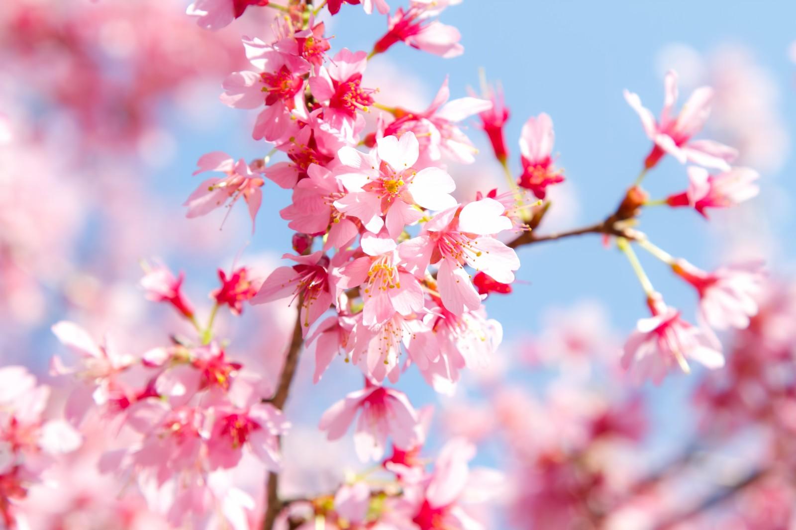 春に聴きたい おすすめ 音楽5選