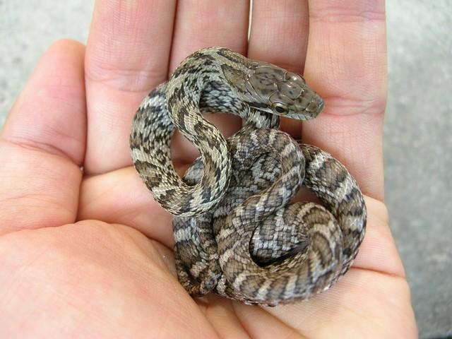 群馬県 ジャパンスネークセンター 蛇 種類