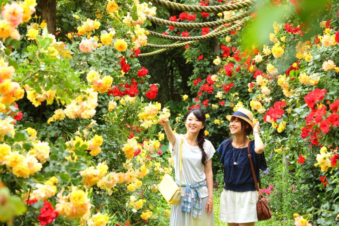 静岡県 熱海 アカオハーブ&ローズガーデン