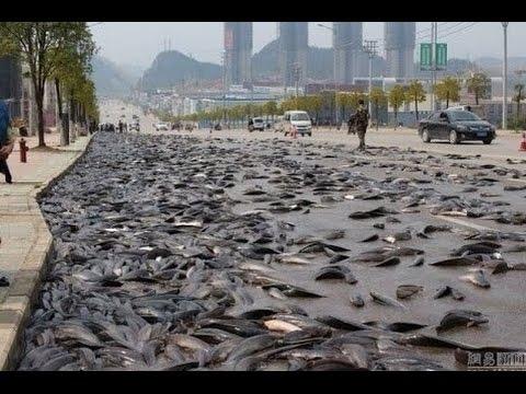 魚 カエル 降ってくる ファフロッキーズとは?