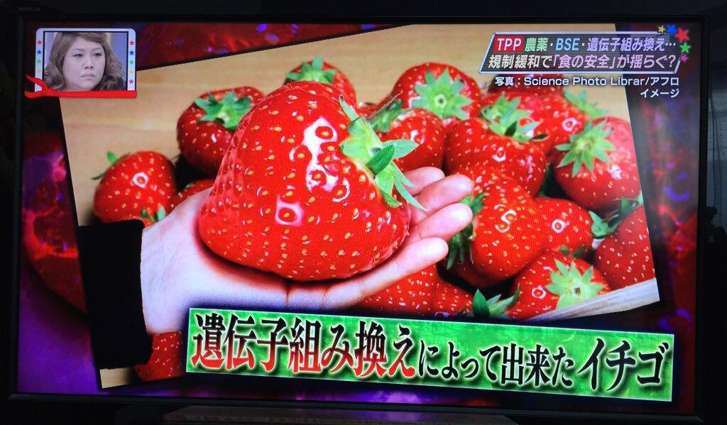 遺伝子組み換え食品 イチゴ
