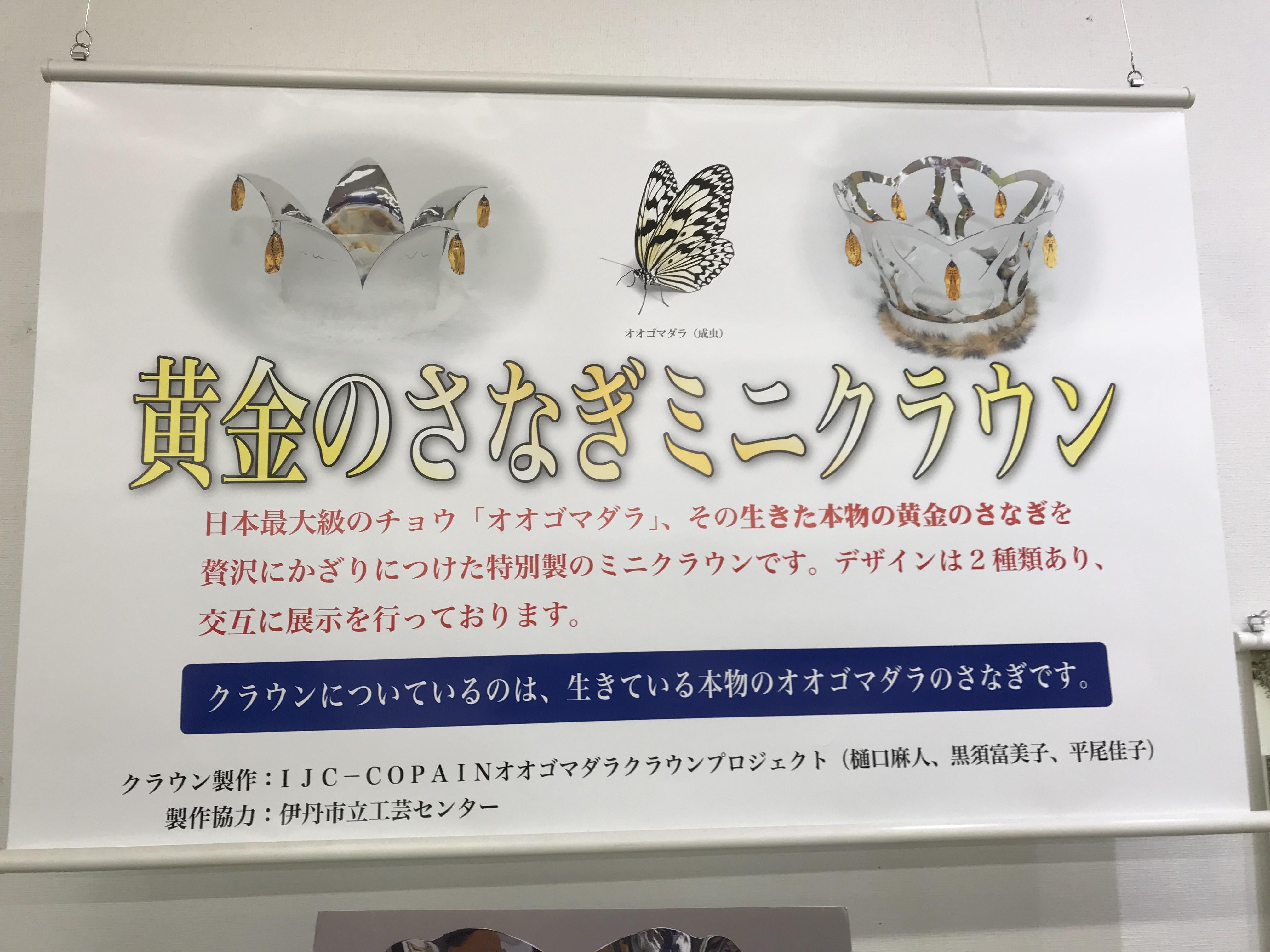 昆虫博物館 黄金のさなぎ