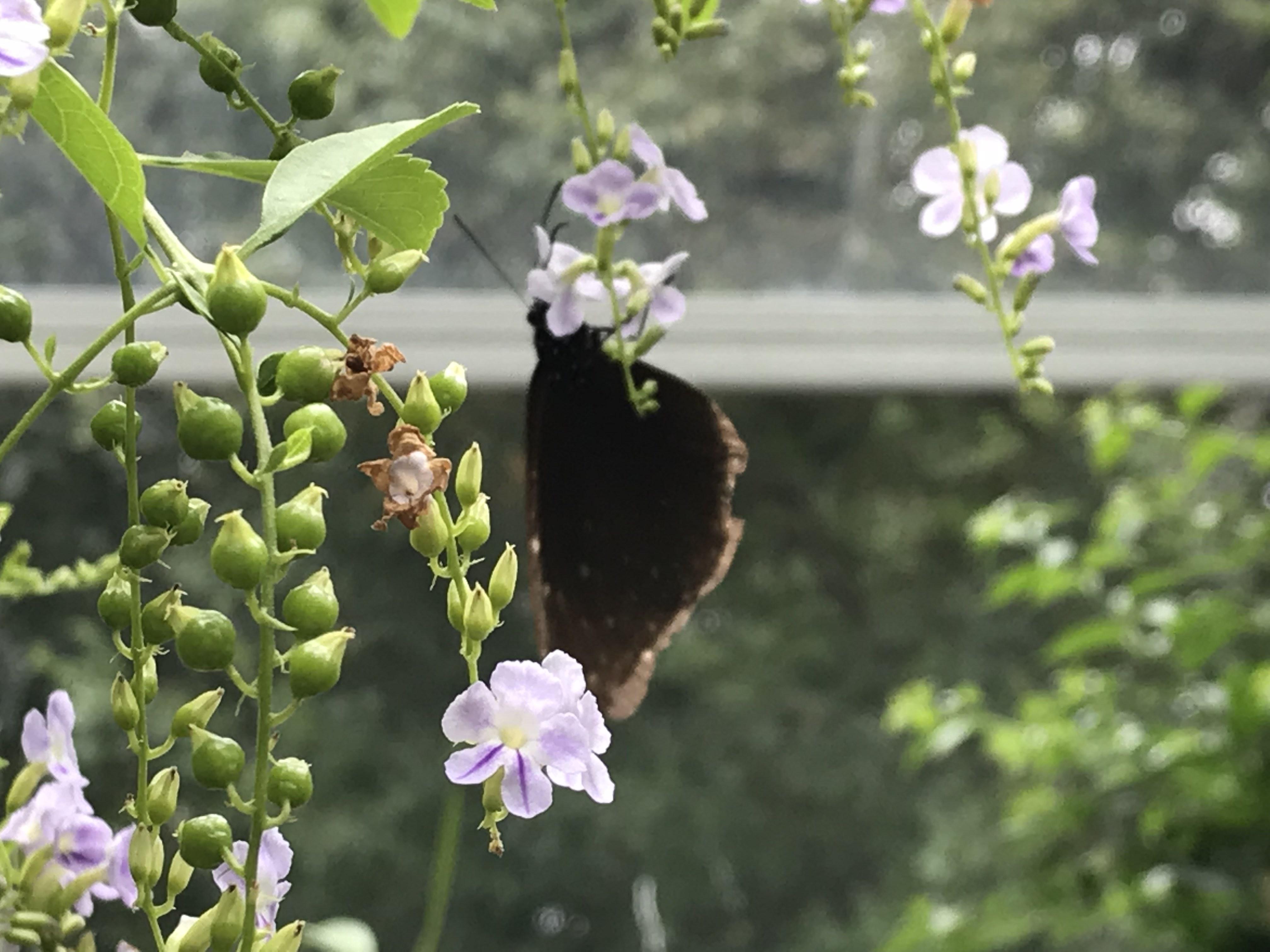 蝶々 写真 ピンぼけ