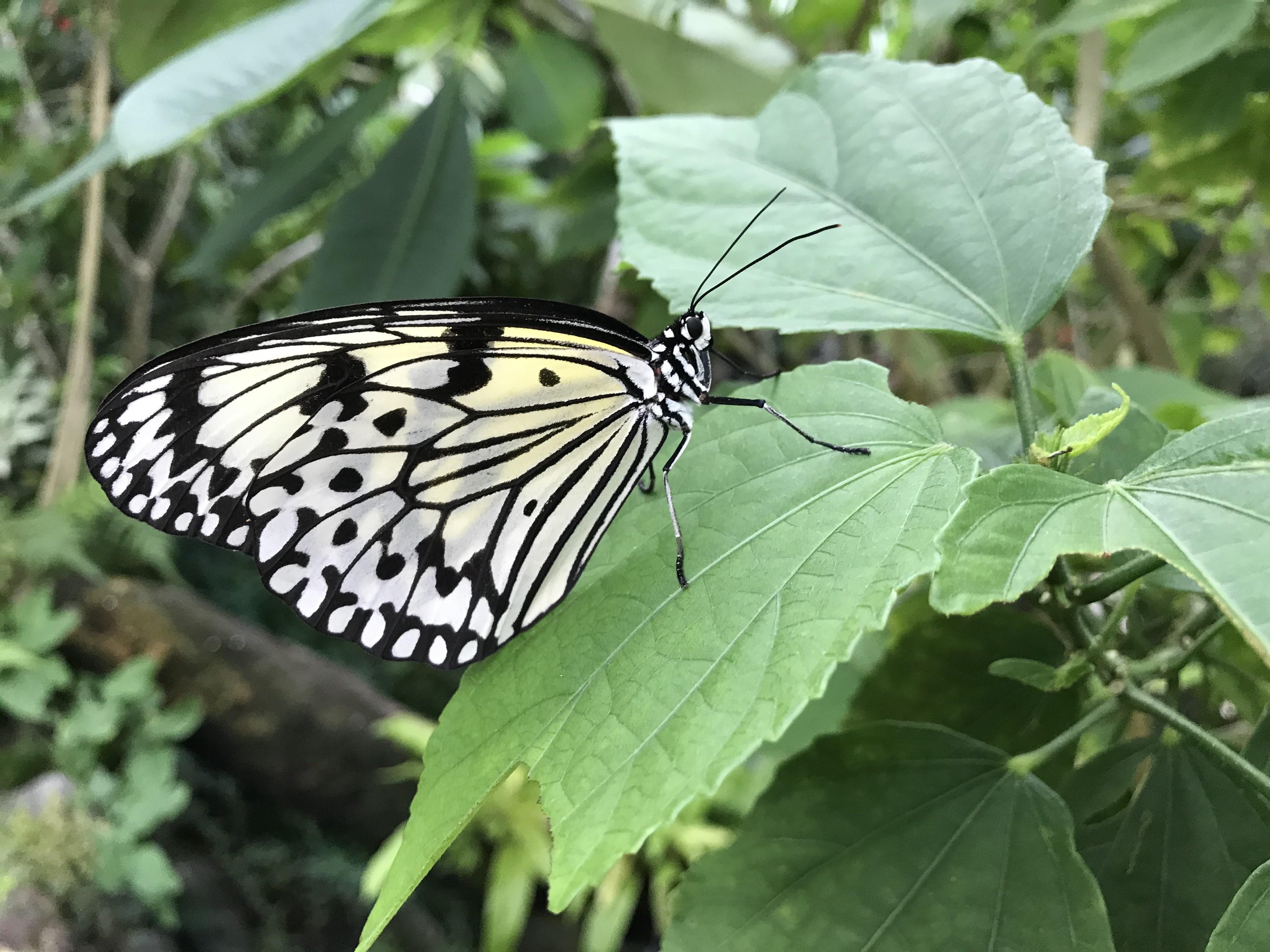 伊丹市 昆虫博物館 蝶々 写真