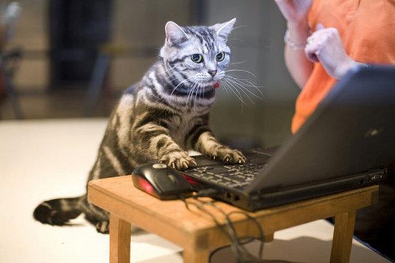 猫 パソコン 操作 ネットの声