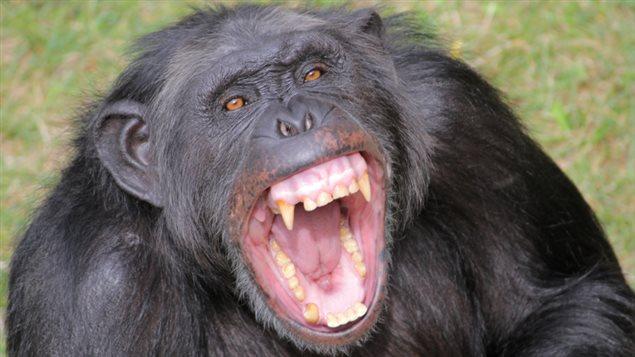 猿にレンガを20個以上ぶつけられ男性死亡