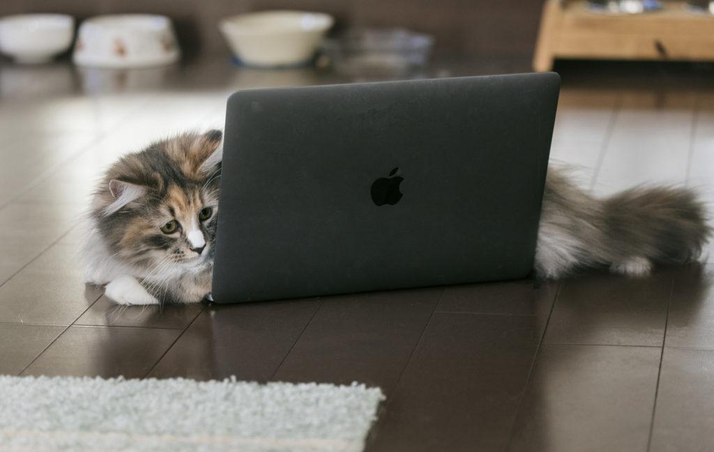ネコ パソコン ネットの反応