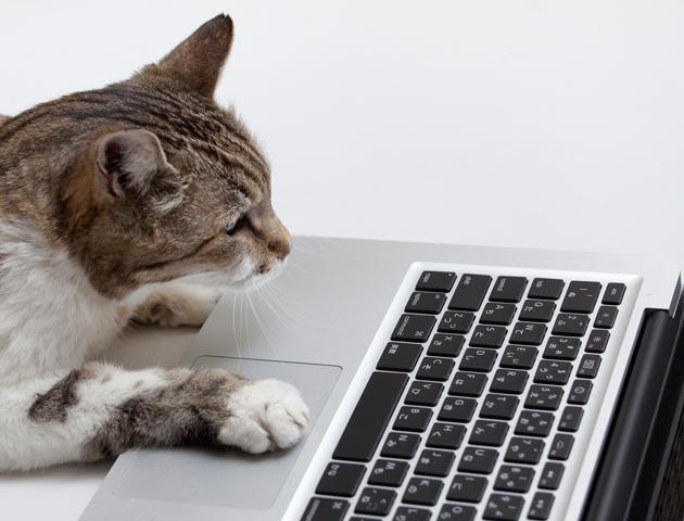 猫 ネットの反応