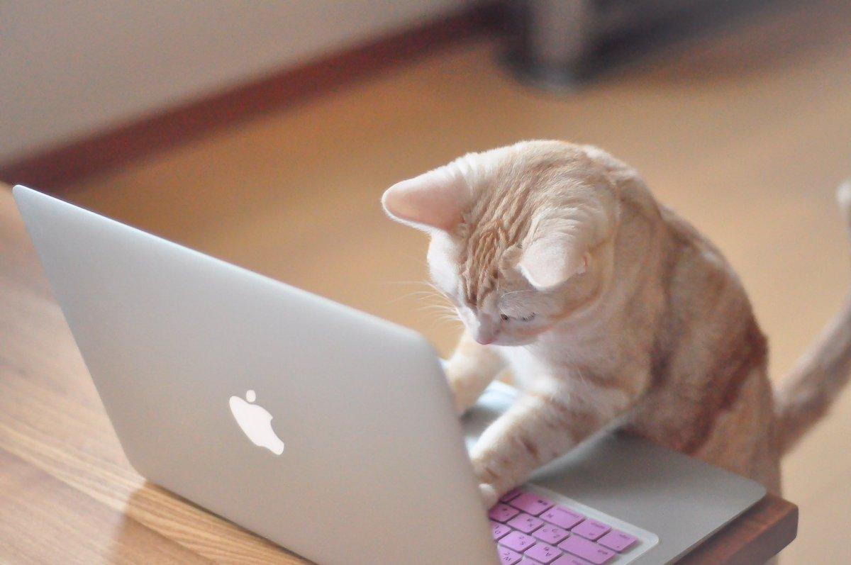 猫 パソコン ネットの反応