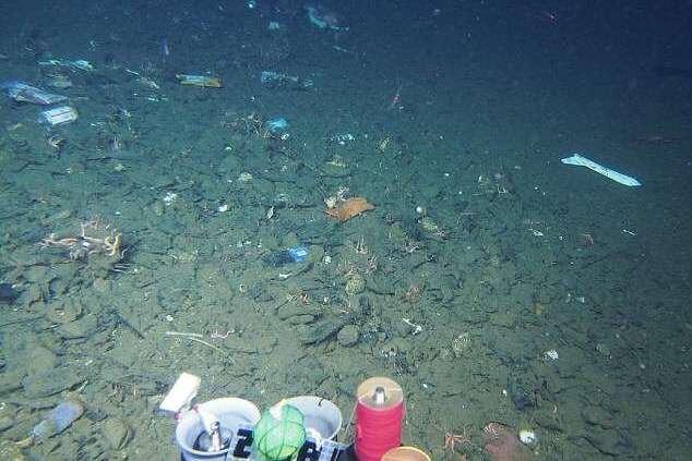 マリアナ海溝 汚染