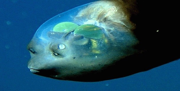 深海 生物