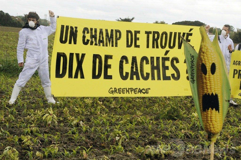 遺伝子組み換えトウモロコシ 栽培禁止