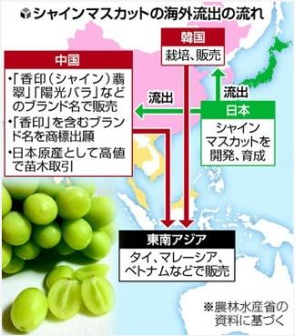 「種苗法改正案」種子の海外流出の流れ