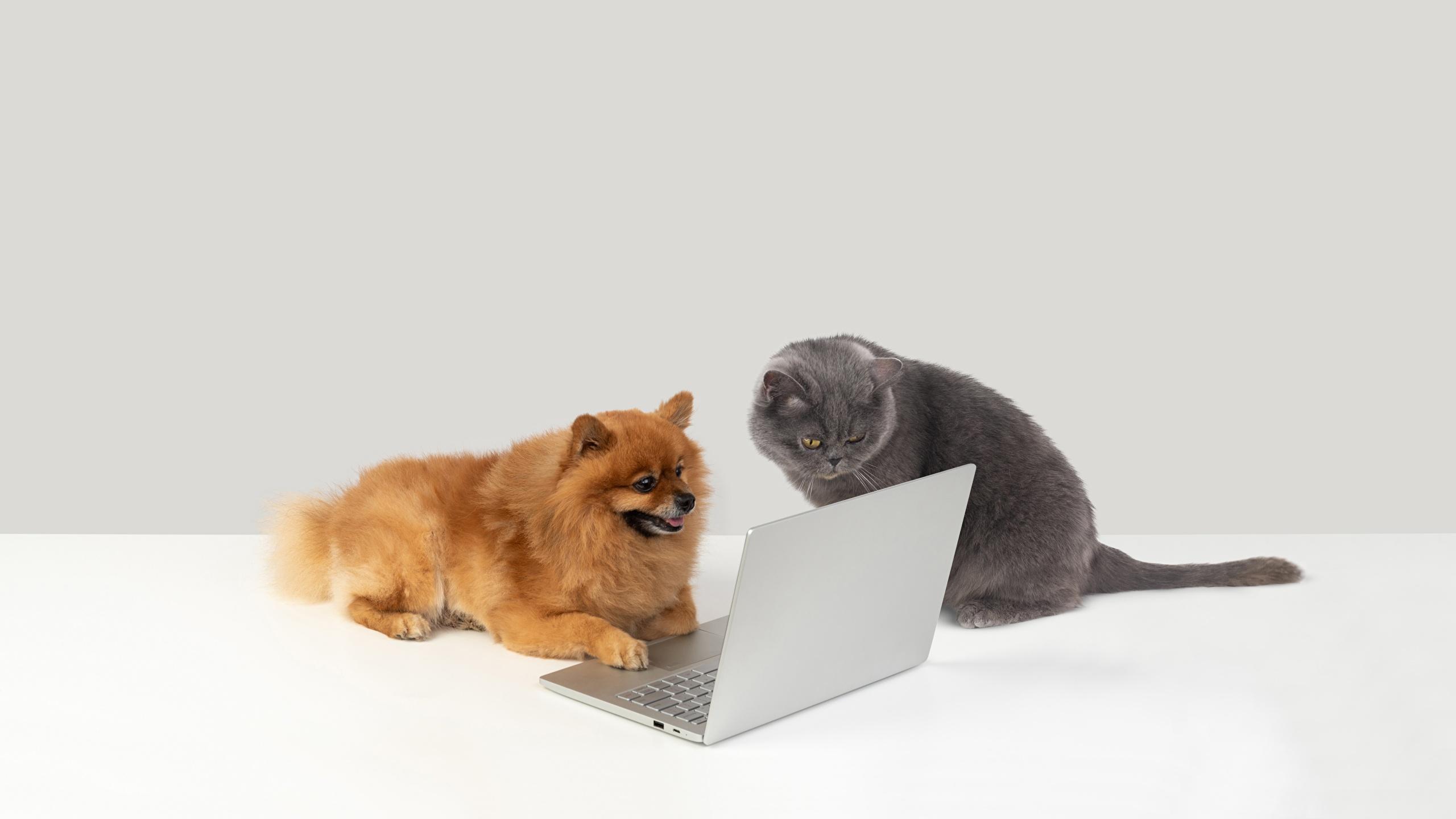 【ホビカン】犬と猫とパソコンからのネットの反応