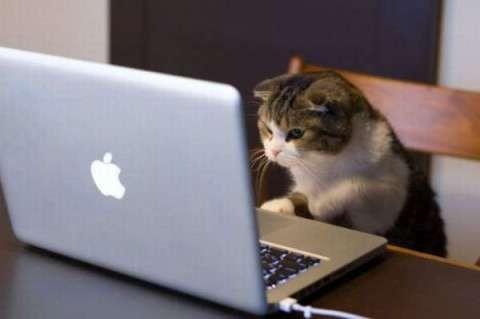 パソコン猫でみんなの声