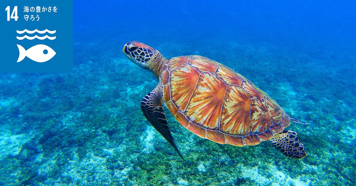 袋は極限まで資源を使わず、有毒ガスも出ないし、そもそもウミガメは袋を食べない